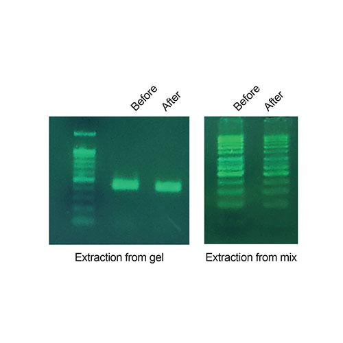 DNA ext. kit (agarose gel & PCR)