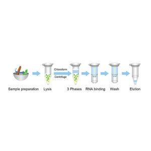 Plant RNA extraction Kit